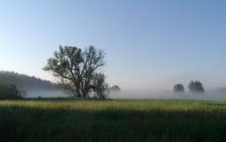 Bosque de los árboles en luz del sol. Fotografía de archivo libre de regalías
