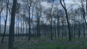 Bosque de los árboles quemados después de fuego almacen de video