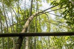 Bosque de los bastones de bambú Foto de archivo