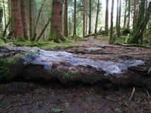 Bosque de los hongos fotografía de archivo