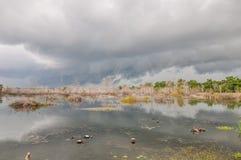 Bosque de los humedales en Camboya Imagen de archivo