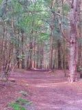 Bosque de los Países Bajos Fotos de archivo libres de regalías