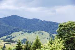 Bosque de los pinos en las montañas Fotografía de archivo libre de regalías