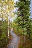 Bosque de los territorios del noroeste Fotografía de archivo libre de regalías