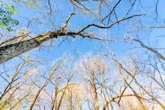 Bosque de Luisiana Imagen de archivo libre de regalías