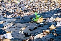Bosque de Luisiana Fotografía de archivo libre de regalías