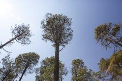 Bosque de México con los rastros y los árboles únicos Fotos de archivo libres de regalías
