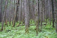 Bosque de madera Imagenes de archivo