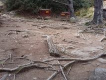 Bosque de madera fotografía de archivo libre de regalías