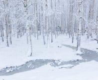 Bosque de madera de abedul cubierto en nieve Fotografía de archivo libre de regalías