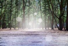 Bosque de madera del pino de la tabla y de la naturaleza Fotos de archivo