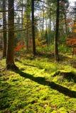 Bosque de madera del primer del árbol de la naturaleza fotos de archivo