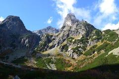 Bosque de madera del verde de la naturaleza de la montaña Imagen de archivo