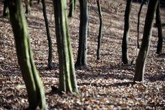 Bosque de madera dura Foto de archivo