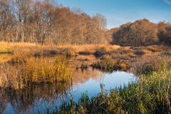 Bosque de Marsh Bog Trees Stream And de la región pantanosa Foto de archivo libre de regalías