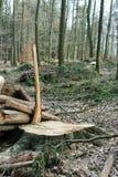 Bosque de Moutain después de la madera de la cosecha Imágenes de archivo libres de regalías