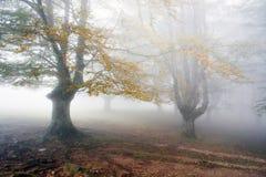 Bosque de niebla Fotografía de archivo libre de regalías