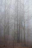 Bosque de niebla foto de archivo libre de regalías