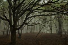 Bosque de niebla Imagen de archivo
