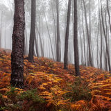 Bosque de niebla Fotografía de archivo