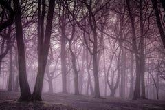 Bosque de niebla Imagen de archivo libre de regalías