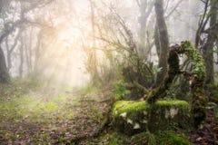 Bosque de niebla con los rayos del sol Foto de archivo