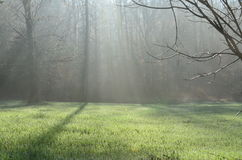 Bosque de niebla de la mañana Fotos de archivo