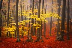 Bosque de niebla durante otoño Imagenes de archivo
