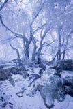 Bosque de niebla en invierno Foto de archivo libre de regalías