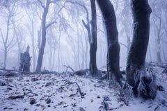 Bosque de niebla en invierno Fotografía de archivo