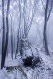 Bosque de niebla en invierno Imagen de archivo libre de regalías