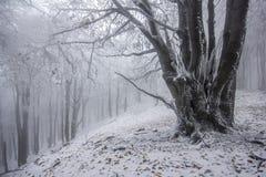 Bosque de niebla en invierno Imágenes de archivo libres de regalías