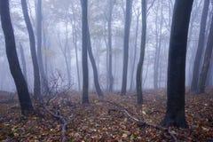 Bosque de niebla en otoño Fotos de archivo libres de regalías