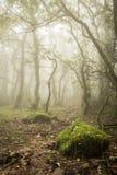 Bosque de niebla en otoño Imágenes de archivo libres de regalías