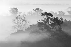 Bosque de niebla hermoso blanco y negro de Misty Clouds durante sunri Foto de archivo
