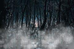 Bosque de niebla iluminado por la luna gótico espeluznante en la noche Grande para los proyectos del horror, góticos, espeluznant imagen de archivo libre de regalías