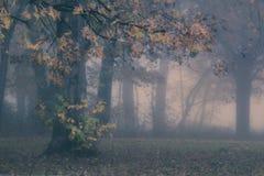 Bosque de niebla místico Fotos de archivo libres de regalías
