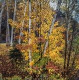 Bosque de Northeat en otoño Fotografía de archivo