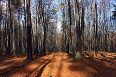 Bosque de noviembre imagen de archivo