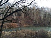 Bosque de noviembre Fotografía de archivo