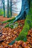 Bosque de Opakua en otoño Imagen de archivo
