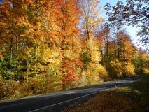 Bosque de oro del otoño Foto de archivo