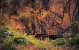 Bosque de oro hermoso al día del otoño fotografía de archivo