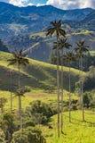 Bosque De Palma De Cera losu angeles Samaria San Felix Salamina Caldas Col zdjęcie stock