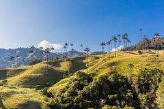Bosque De Palma De Cera losu angeles Samaria San Felix Salamina Caldas Col zdjęcie royalty free