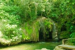 Bosque de Pantanl en bonito Fotos de archivo libres de regalías