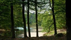 Bosque de Peacefull en un lago en NP Hoge Veluwe Fotos de archivo libres de regalías