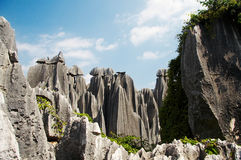 Bosque de piedra Imagenes de archivo