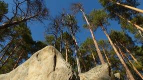 Bosque de piedra Fotografía de archivo libre de regalías
