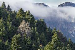 Bosque de Pinsapo Fotos de archivo libres de regalías